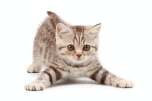 cat-vid1