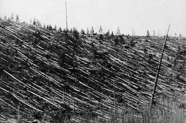 tunguska-trees